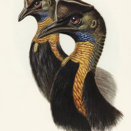 Zoology of Madagascar